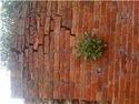 repair a 100-200 year old high garden brick wall