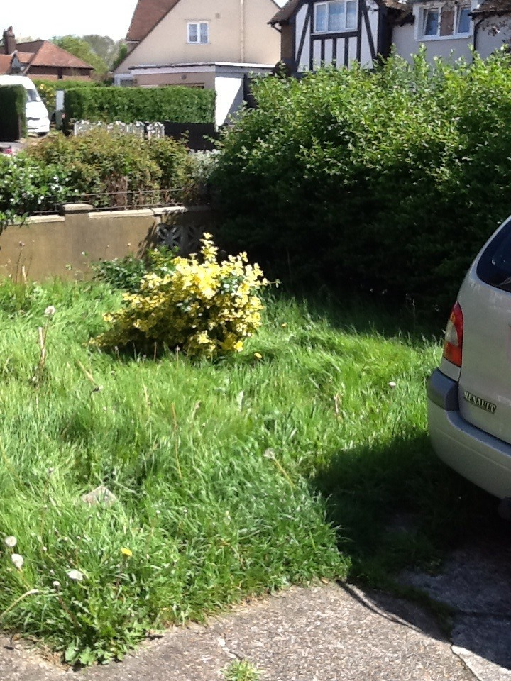 Lawnmowing And Hedgecutting - Landscape Gardening Job In Middle Park South London - MyBuilder