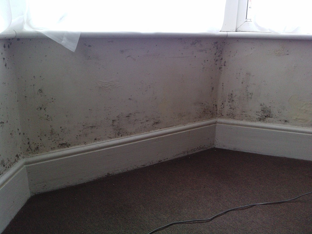 Tackle Damp To Bay Window Damp Proofing Job In