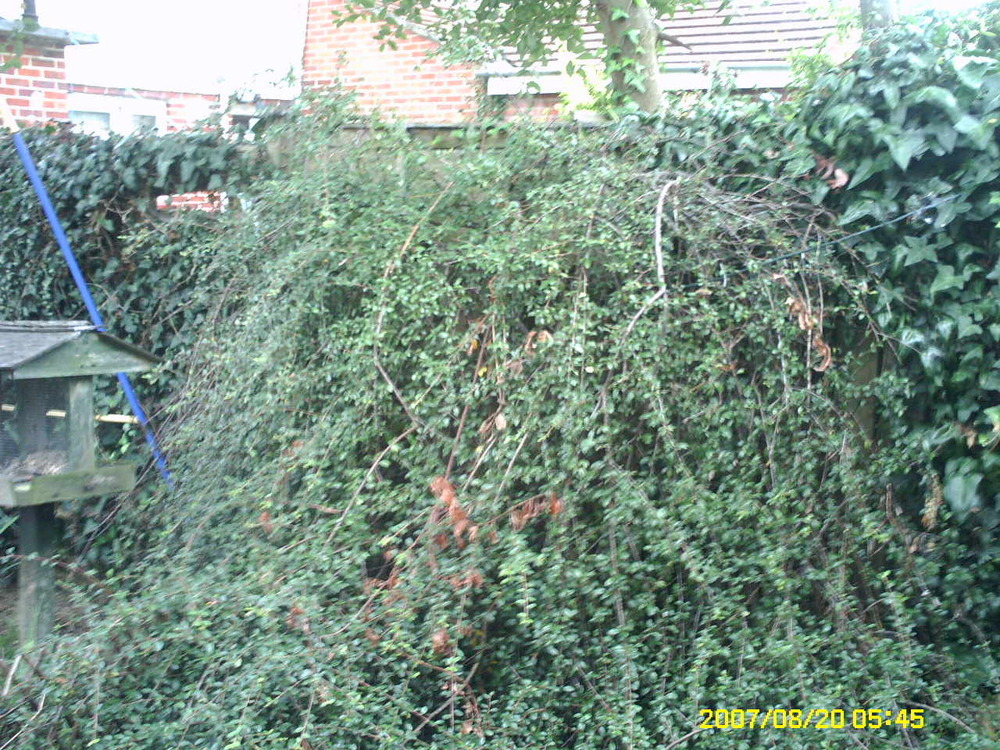 Landscape Gardeners Gosport Removal Of 2 Shrubs Landscape