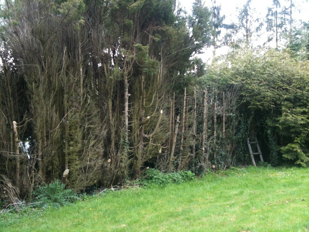 Remove 80m Of Leylandii Hedge And Replace With Fencing