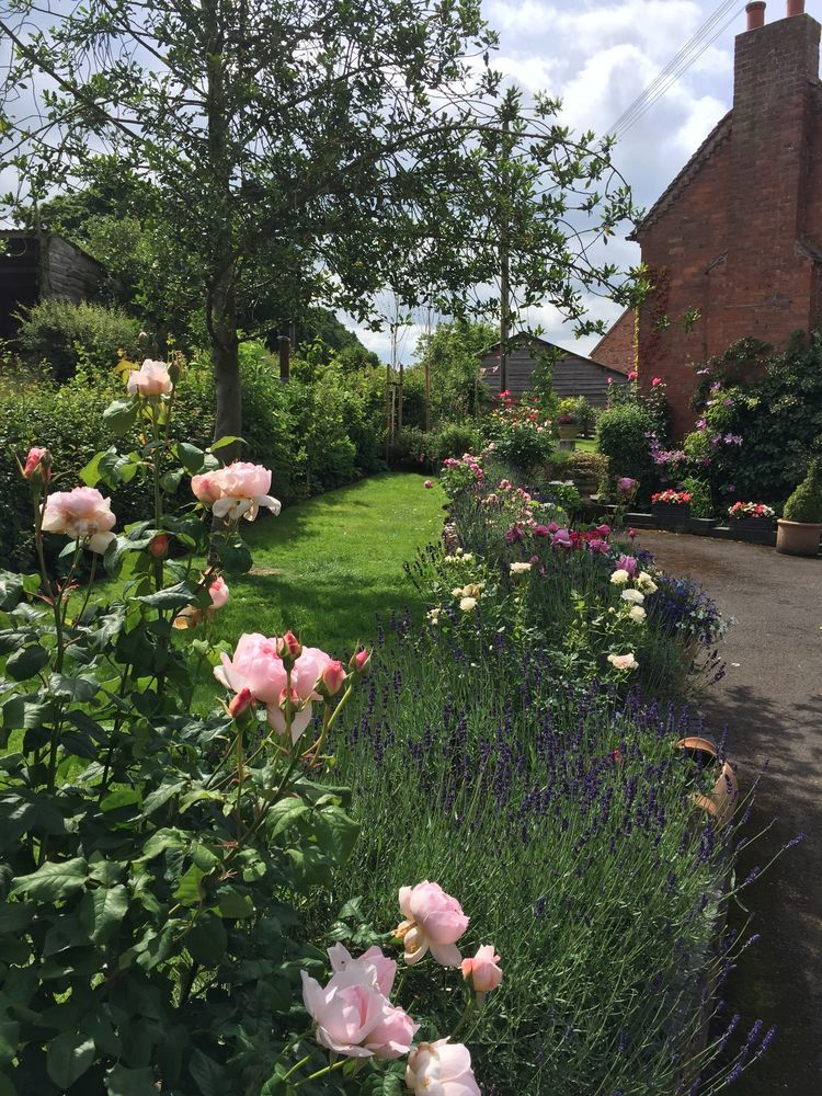 Three Trees Gardening: 100% Feedback, Gardener, Decking