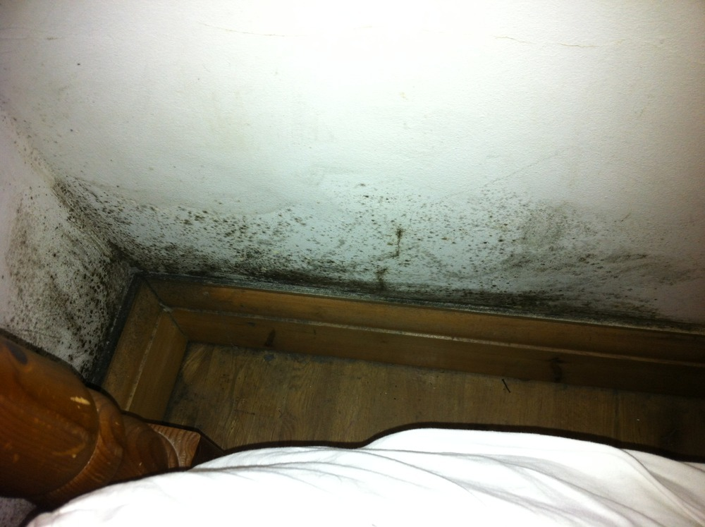 Removal Of Black Mould In Bedroom And Identify Cause