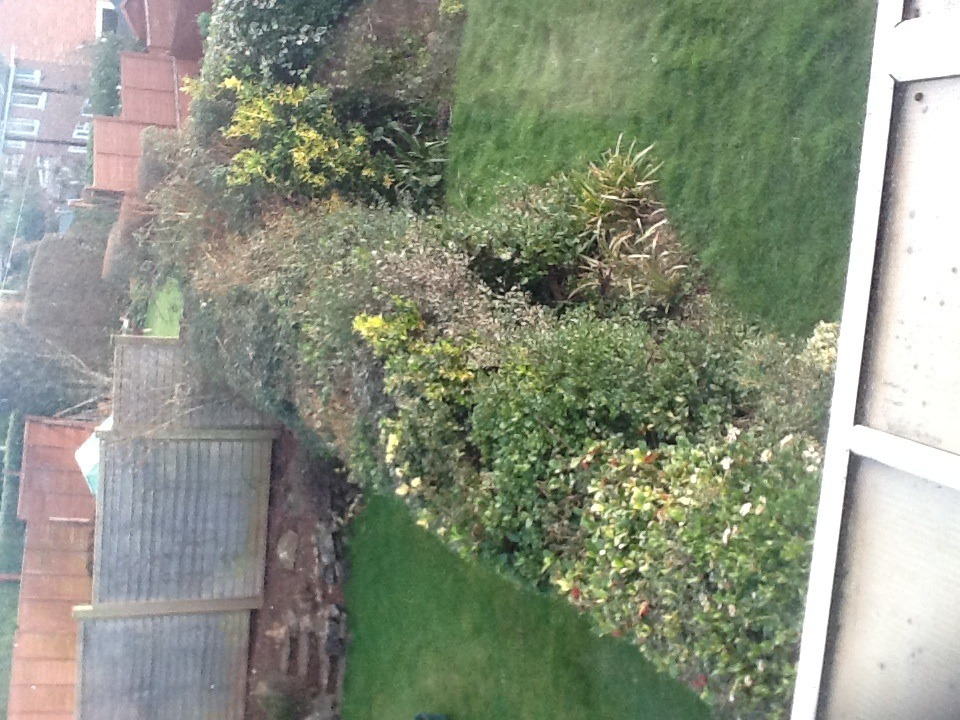 Hedge Removal - Landscape Gardening Job In Exeter Devon - MyBuilder